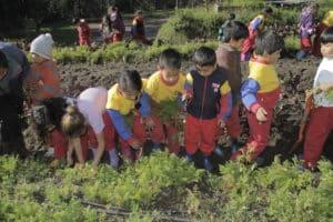 INEPE en Equateur - Jardin potager